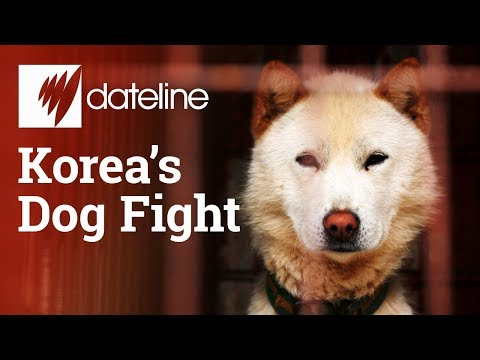 Korea's Dog Fight