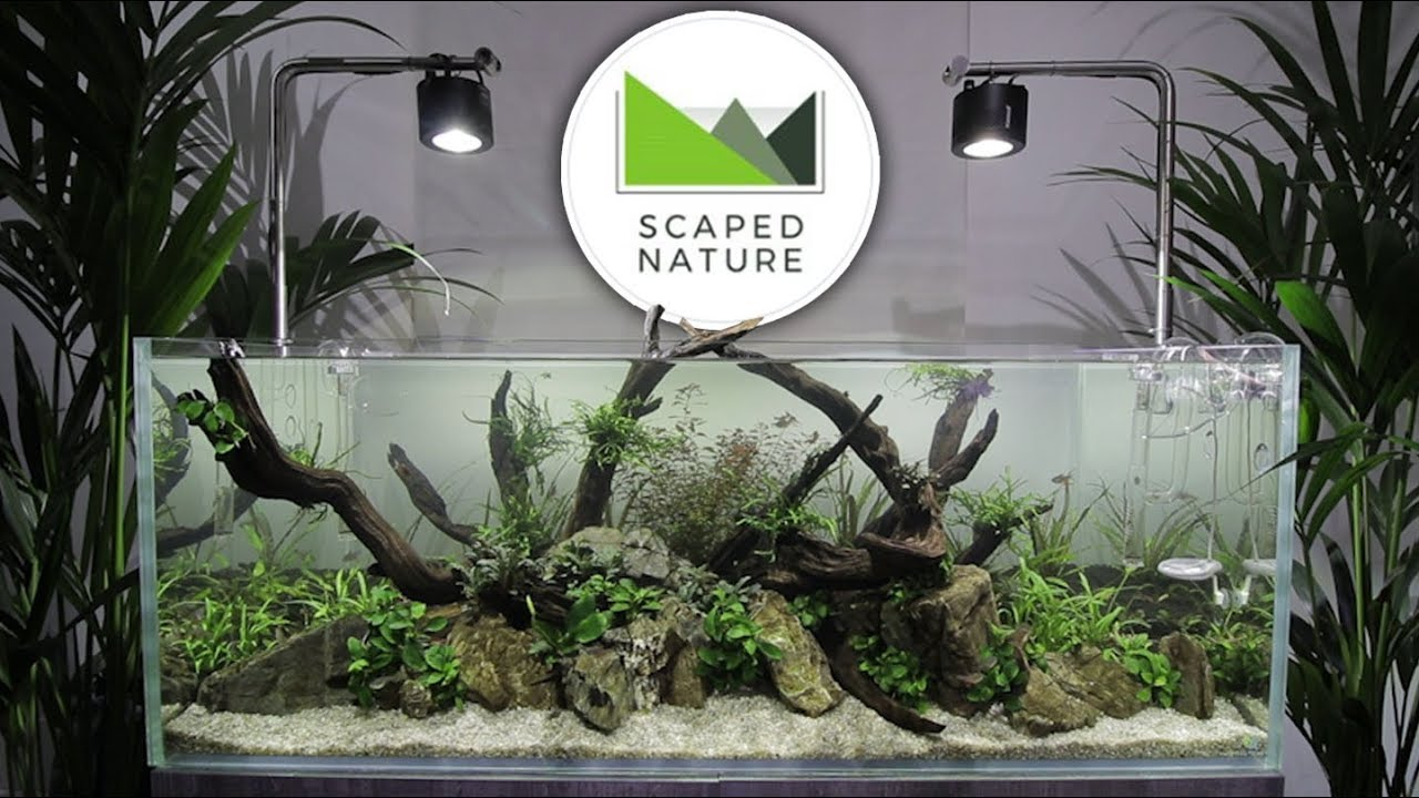 Scaped Nature - Aquascaping Shop GRAND OPENING - YouTube