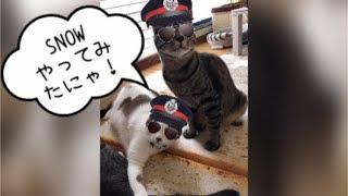 【snow】猫スタンプで遊んでみました☆【うちの子4にゃんず】