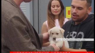 Кино про бездомных щенков сняли в Новосибирске