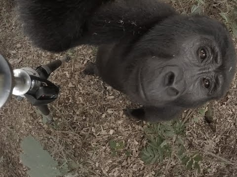 360 Video of Sanctuary Gorilla Forest Camp, Uganda