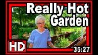 Really Hot Garden - Wisconsin Garden Video Blog 895
