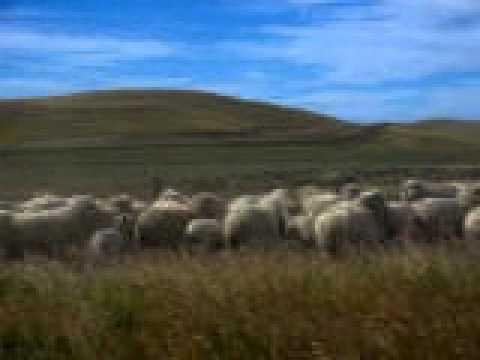Ovejas desde el Camino - Tierra del Fuego - Argentina