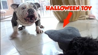 PRANKING MY DOG WITH A SCARY HALLOWEEN TOY THAT MOVES! | SO FUNNY!