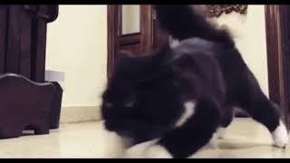 Кошачий дрифт.