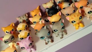 all my lps shorthair cats