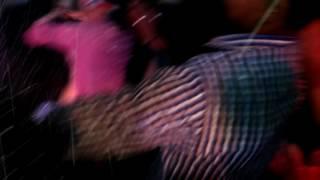 Nagine dance of nasriganj boys in dj
