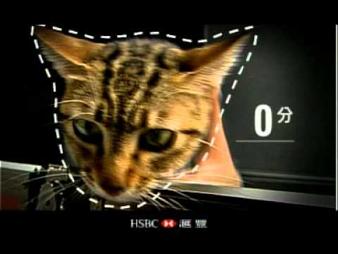 hsbc pet insurance