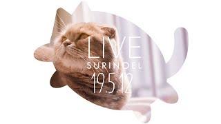 수리노을-고양이가족-19-5-12-live-suri