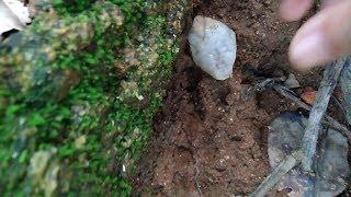 find diamond, đi tìm kim cương bên ngọn núi lửa đã tắt