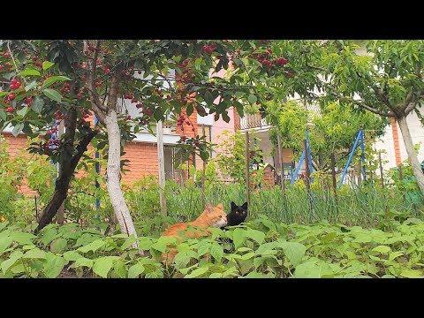 Relaxing Cat Video 55