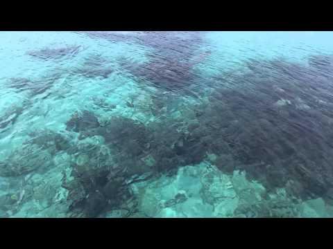 Bimini Bahamas plane crash reef