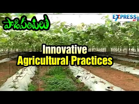 Innovative Agricultural Practices In Vegetables Cultivation :  Paadi Pantalu