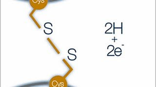 What is a disulfide bond?