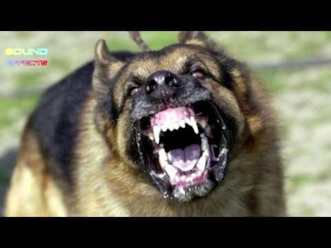 security-dog-barking-sound-effect-#15