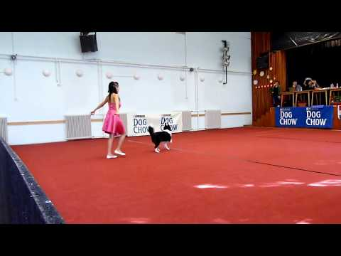 Országos Dog Dancing Bajnokság 2017. Juhász Anikó és Izzy