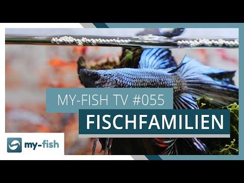 Diese verschiedenen Fischgruppen kannst du im Aquarium halten | my-fish TV