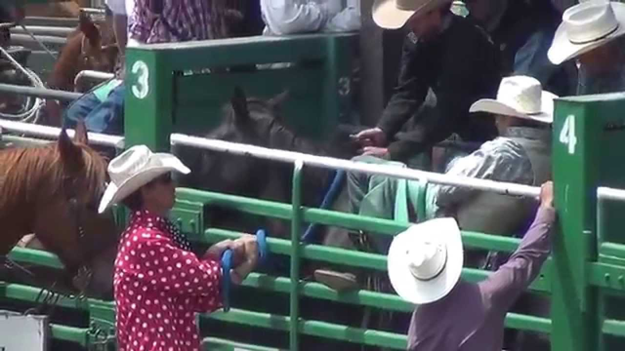 Rowell Ranch Rodeo Cruelty Horse Flips Over Fence