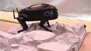 Littledog - Sexy Robots Videos