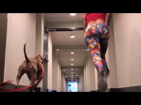 Speed Challenge Against a Pit Bull