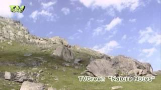 Alpine flora & fauna in Hohe Tauern national park