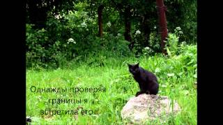 Коты Воители 9 жизней Тёмной Звезды