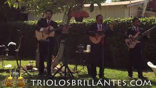 SABOR A MI -Mexican Trio in Downey, California - Trio Los Brillantes Usa