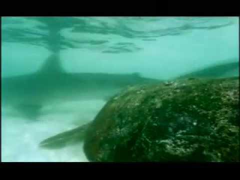 Shark Symbiotic Part 1