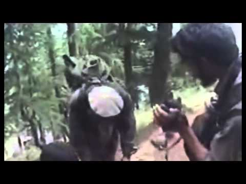 Sawtalo Sar Footage from 2 cameras Operation Red Wings . Lone Survivor Marcus Luttrell Scandal