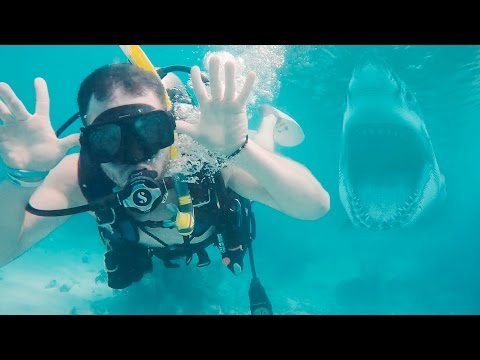 Diving with Sharks in the Keys - Great American Road Trip (Day 51)