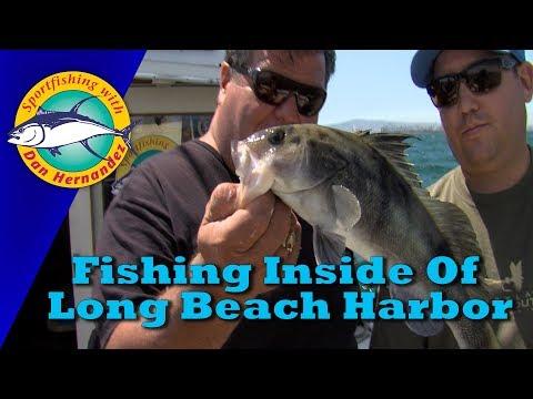 Fishing Inside of Long Beach Harbor   SPORT FISHING