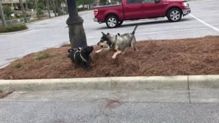 Gemster puppy power