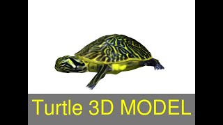 3D Model of Turtle Review