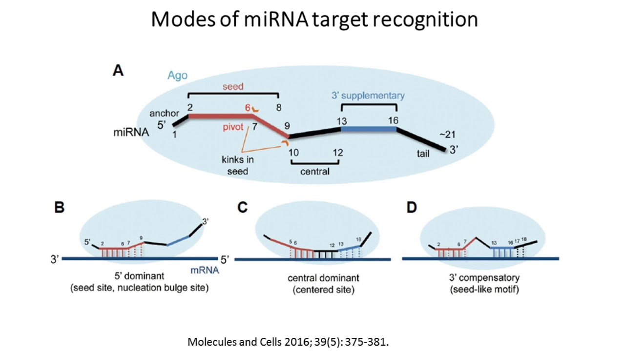 small resolution of the microrna regulatory landscape of msc derived exosomes a systems view