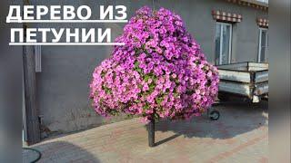 как сделать дерево из петуний
