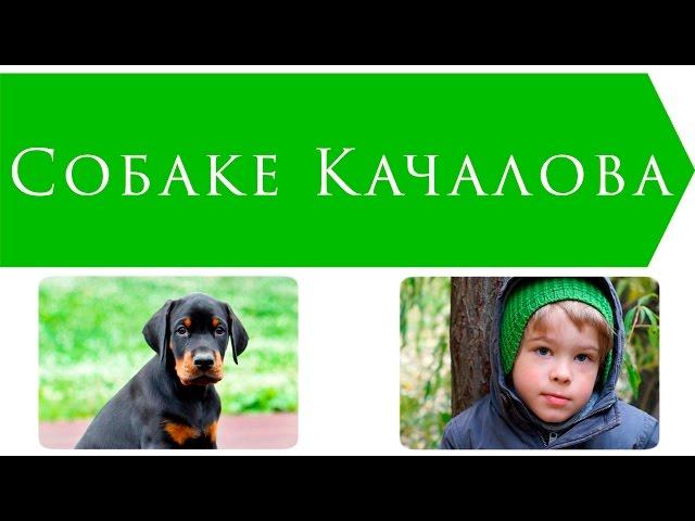 Изображение предпросмотра прочтения – ИльяПаламарчук читает произведение «Собаке Качалова» С.А.Есенина