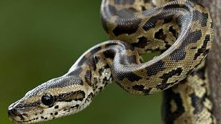 RWANDA LAUNCHES SNAKES & REPTILES EXHIBITION