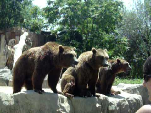 zoo de madrid 065