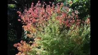 『国立諫早青少年の家』の花壇には、夏の花『真紅のサルビア』と、その施設『いこいの散策路』には、『グラデーションの紅葉』と『ツクツクボウシ』とが、夏から秋へと誘っている。
