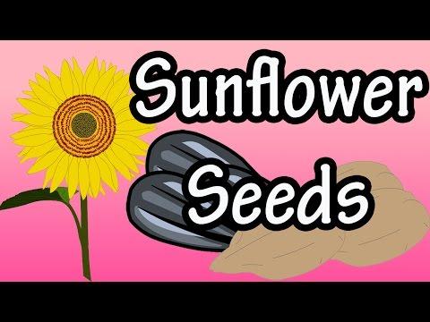 Health Benefits of Sunflower Seeds?