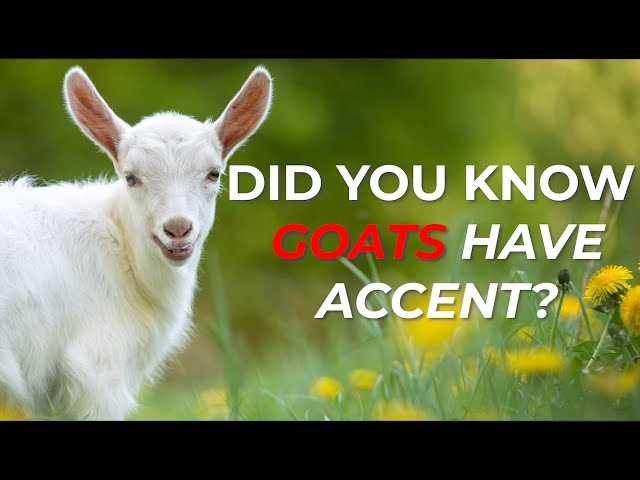 Did you know that Goats have Accent ? Well checkout our video to learn an amazing fact about Goats