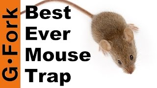 The Best Mouse Trap Ever - GardenFork