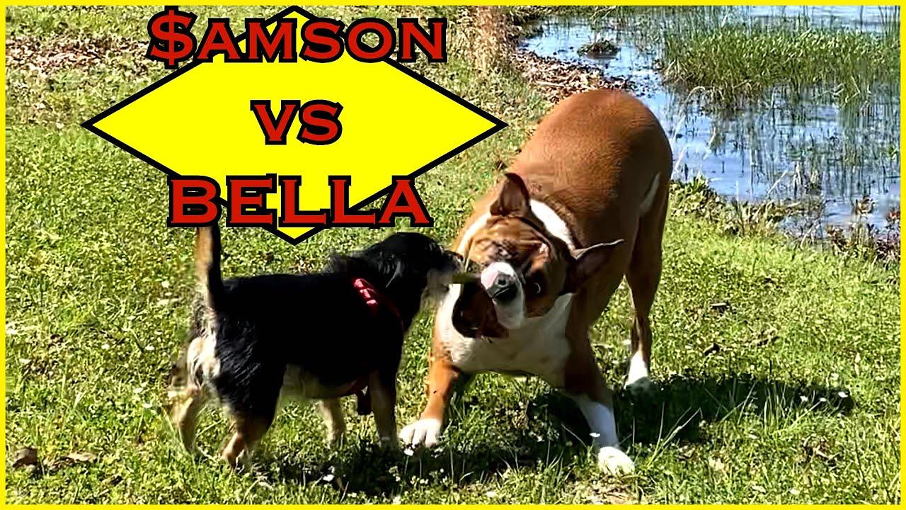 LITTLE BELLA vs big sam