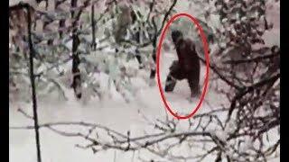 El yeti existe, 3 videos reales captados en camara del yeti - hombre de las nieves