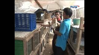 cangkuang rabbit farm nukita bandung west java indonesia