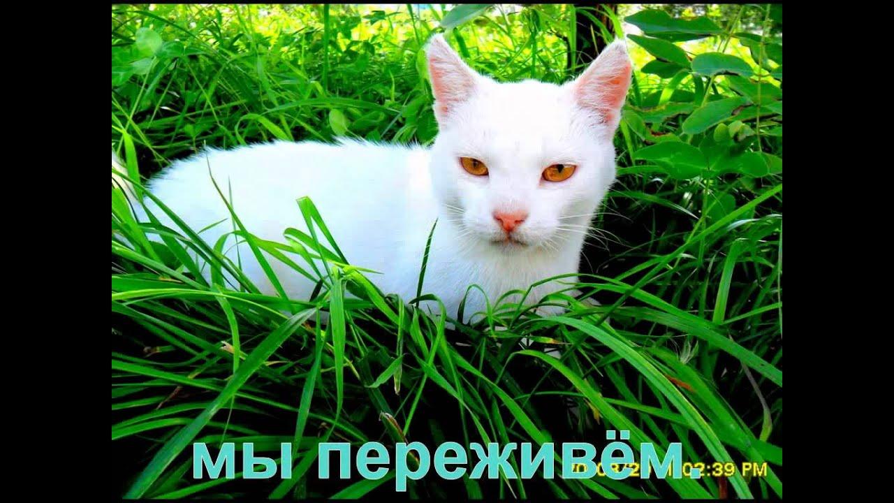 Я по улице иду и улыбку всем дарю песня кот леопольд