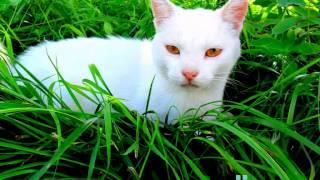 Песенка кота Леопольда - Неприятность эту мы переживём