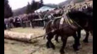 Maso konji (Sokolac-Romanija)