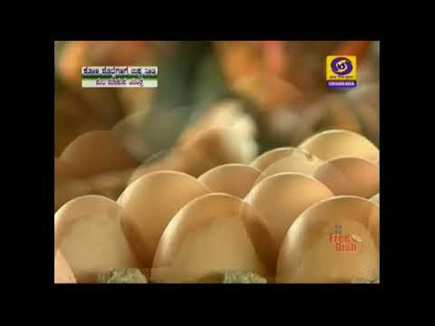 How to Start Poultry Hatcheries Business for production of Chicks