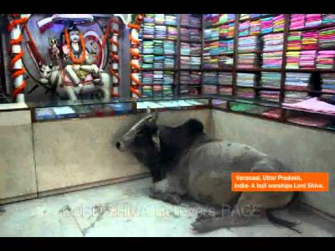 teenmaar news snake visits a shiva temple in nalgonda by
